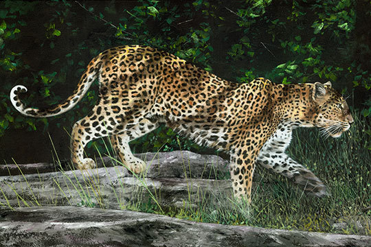 6bb19ea36076 Northcott Naturescapes Kotiya by Phillip Allder DP21377 10 Digital Leopard  Panel $10.50/panel